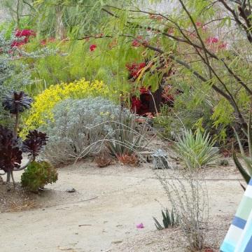 palm springs, real estate, tracy merrigan, native plants, garden, desert garden tour, desert horticultural society