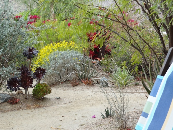 palm springs, real estate, tracy merrigan, native plants, garden, desert garden tour, desert horticultural society