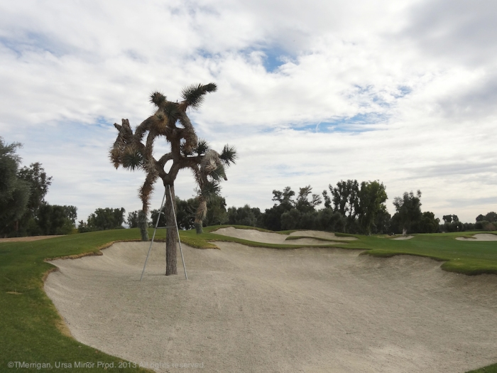 Joshua Tree on the Sunnylands Golf Course, Rancho Mirage, CA