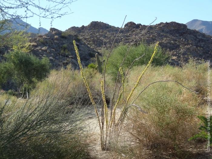 Santa Rosa & San Jacinto National Monument. Palm Desert, CA