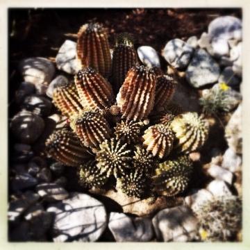 Palm Springs, Desert Garden Tour, real estate, tracy merrigan, DHSCV, Mario Peixoto