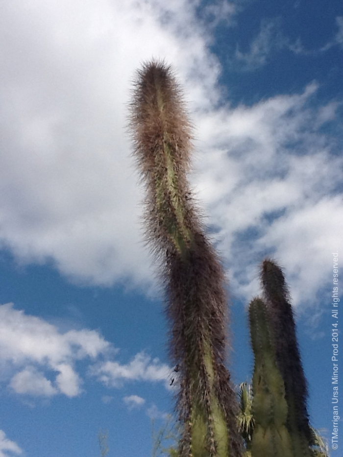 desert garden tour, tracy merrigan, real estate, palm springs, desert horticultural society, native plants, water wise, cactus