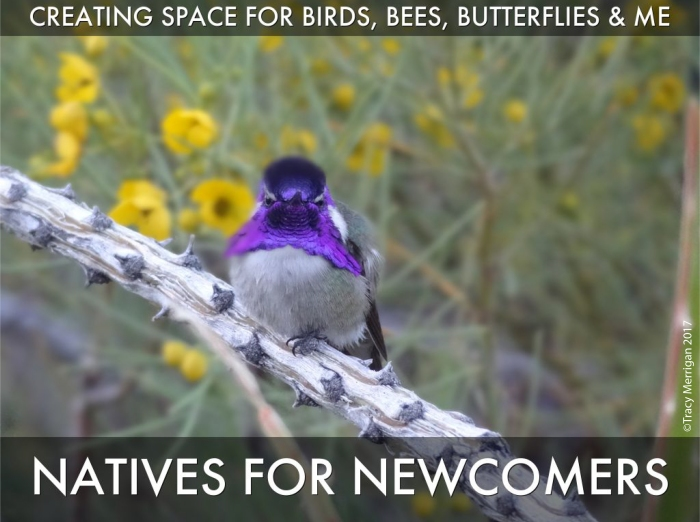 Natives_for_Newcomers-Tracy_Merrigan-Palm_Springs-Speaker