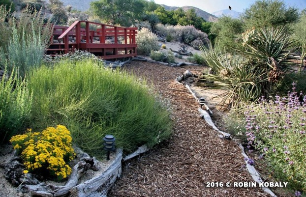 Songbird Cottage Garden_Robin Kobaly