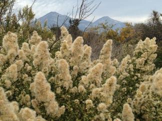 Rancho Santa Ana Botanical Garden, Jan 2017 ©TracyMerrigan
